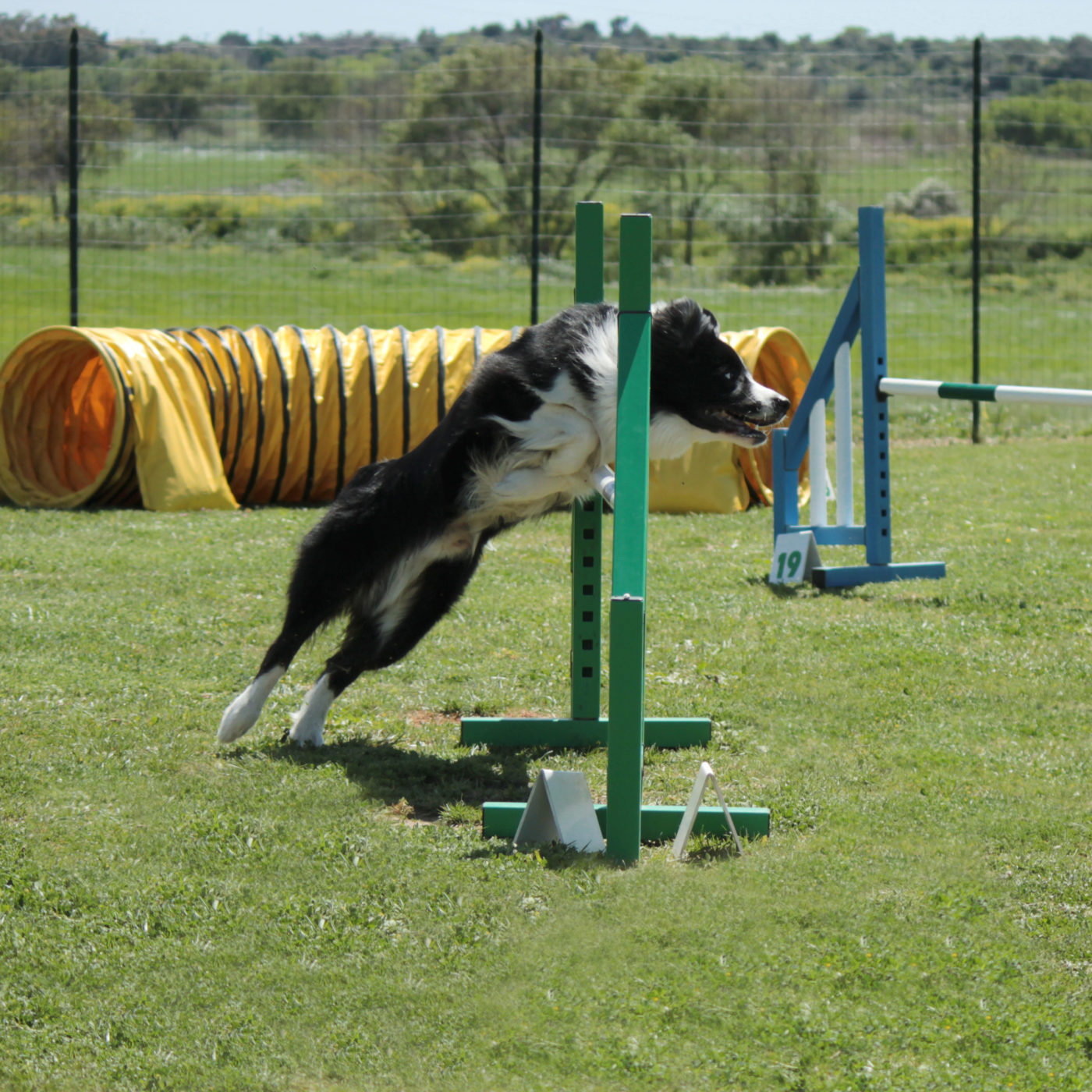 Boarding Dogs In Midland Tx