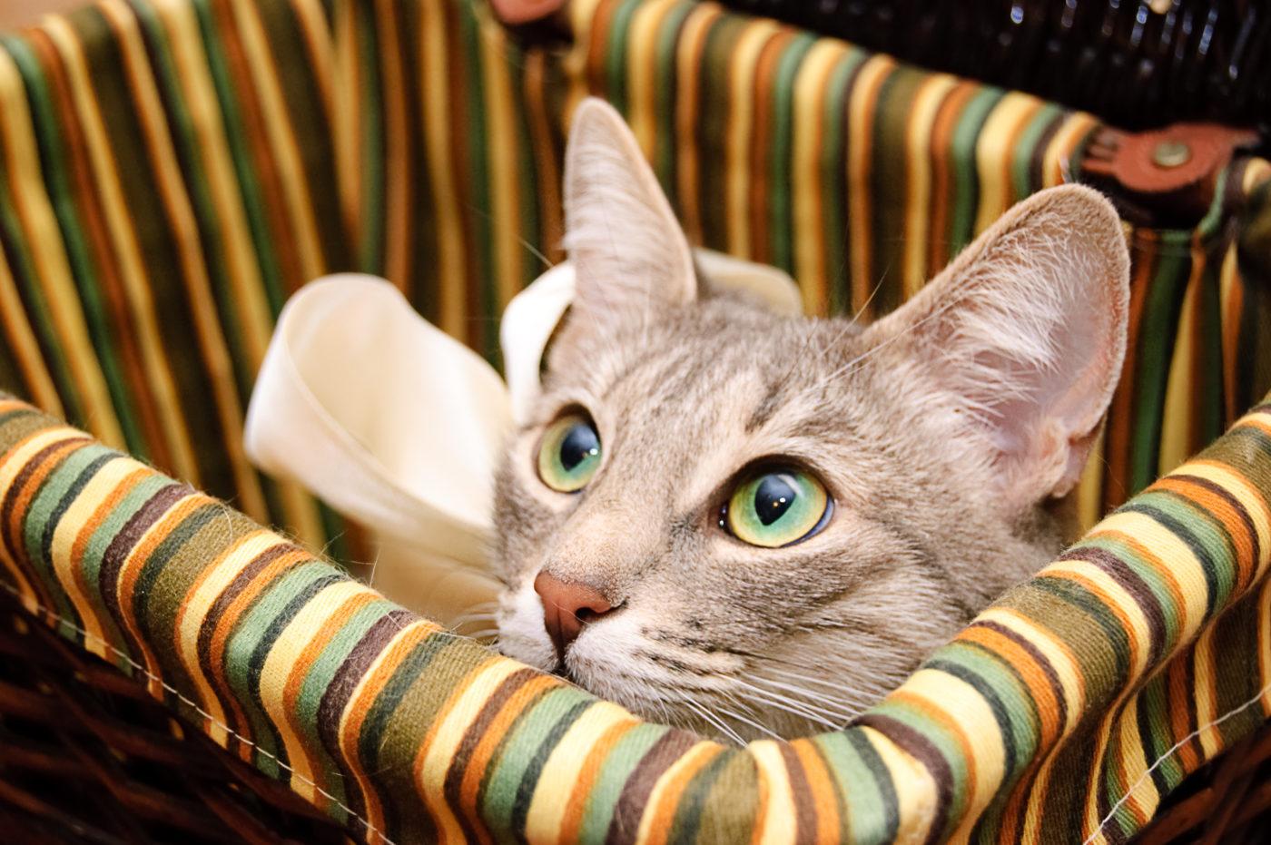 curious-kitten